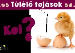 Te láttál már kiscsibéket kikelni a tojásból? Nem!? Akkor most megnézheted!