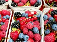 A pirosbogyós gyümölcsök ereje