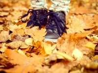 Kirándulj a családdal ősszel is!