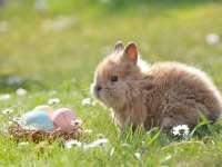 A legjobb húsvéti és tavaszi szüneti programok Kaposváron és környékén