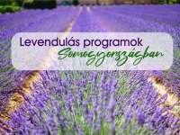 Levendulás programok Somogyországban