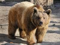 Meglátta a medve az árnyékát