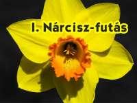 I. Nárcisz-futás - Öltözz sárgába!