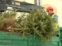 Ne dobd csak úgy el! - Karácsonyfa begyűjtése Kaposváron